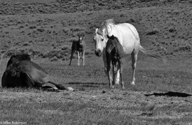 Foal Season