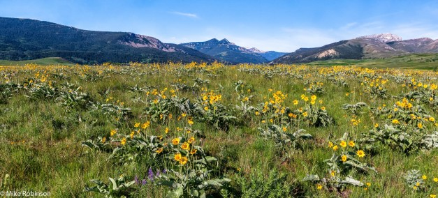 Montana Wildflower Field 1.jpg