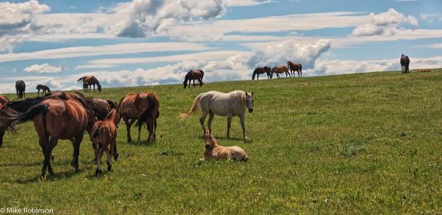 Pryor Horses 1