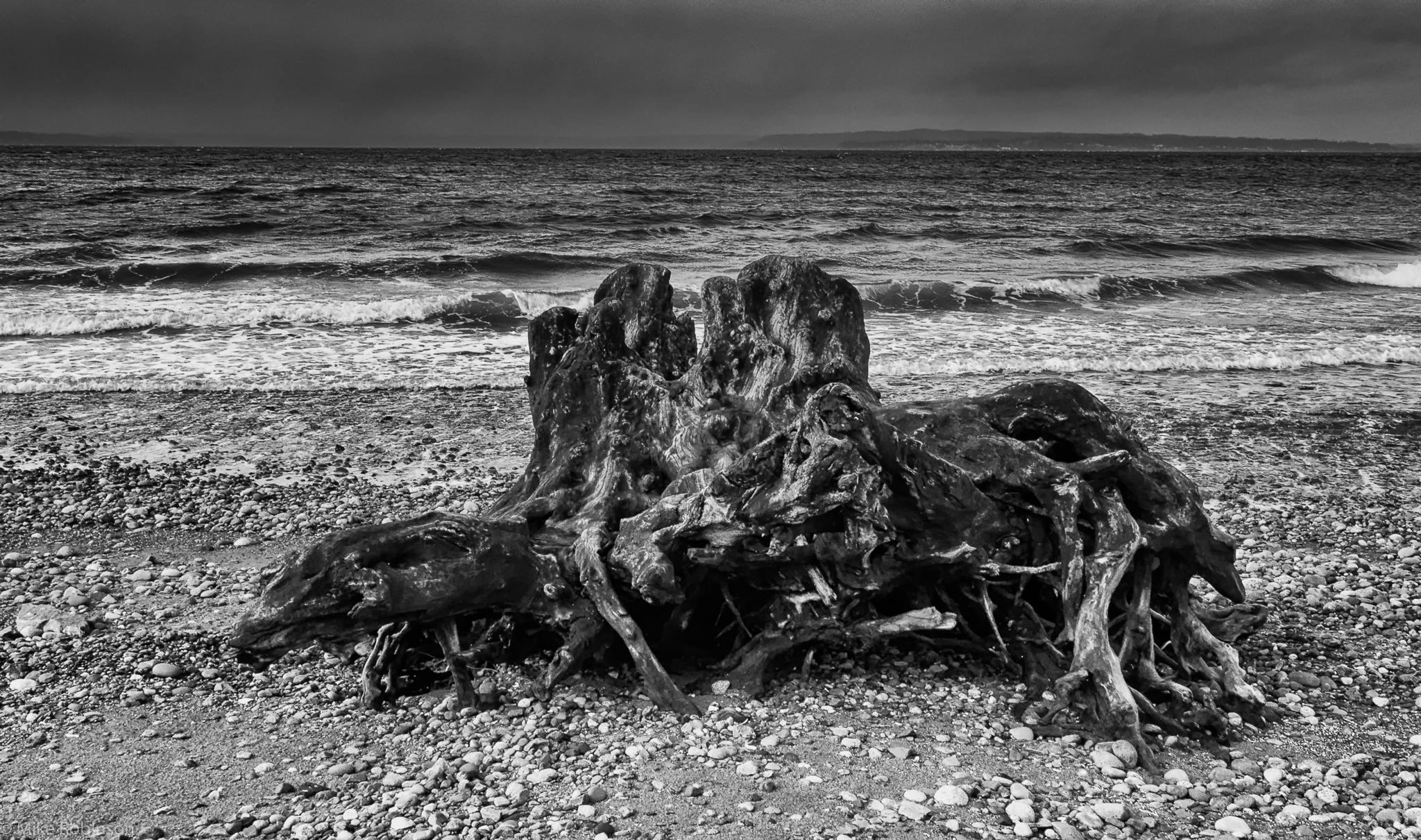 Driftwood_2_BW.jpg