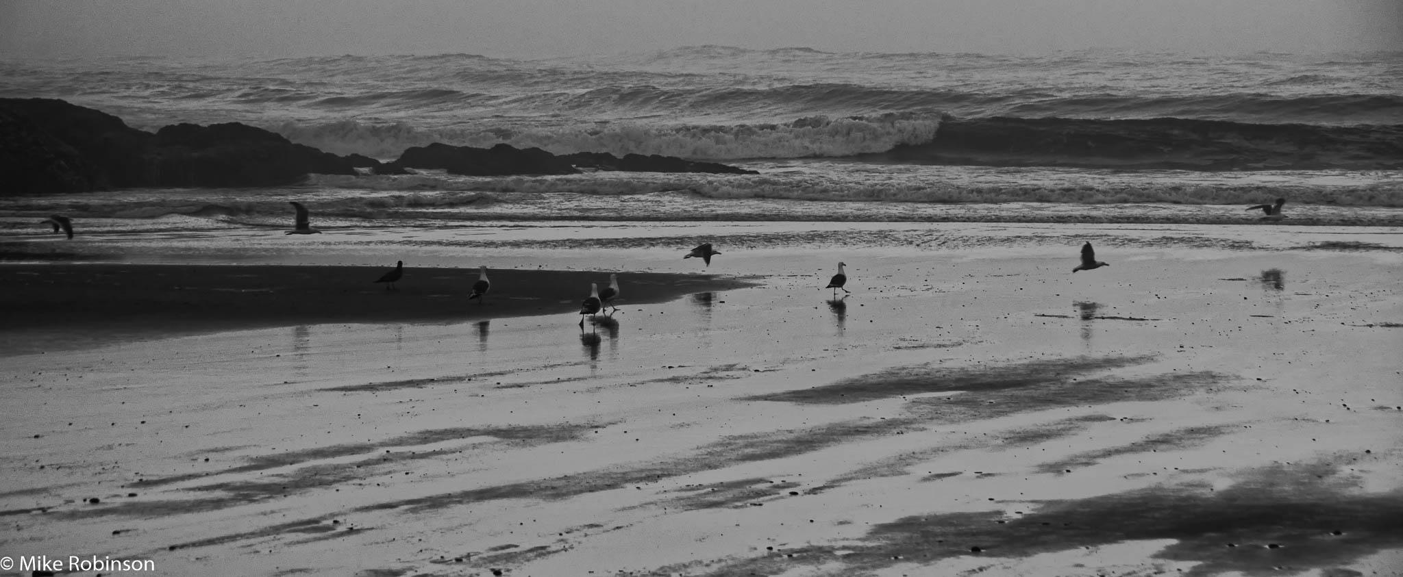 Heceta Gulls and Waves.jpg