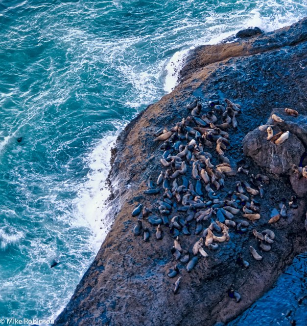 Heceta Sea Lions.jpg