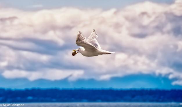 Seagull Snack 5.jpg