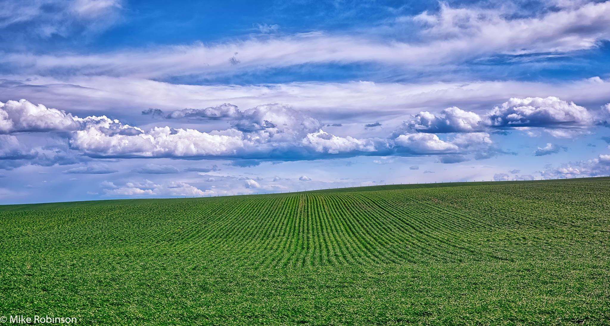 Green Field Blue Sky.jpg