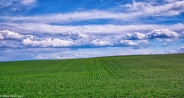 Green Field Blue Sky.jpg