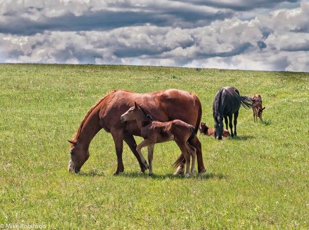 Pryor Horses 2.jpg