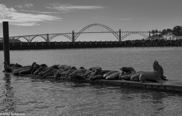 Newport Bridge and Sea Lions.jpg
