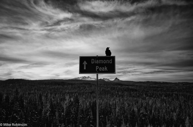 Diamond Peak Bird and Sign.jpg