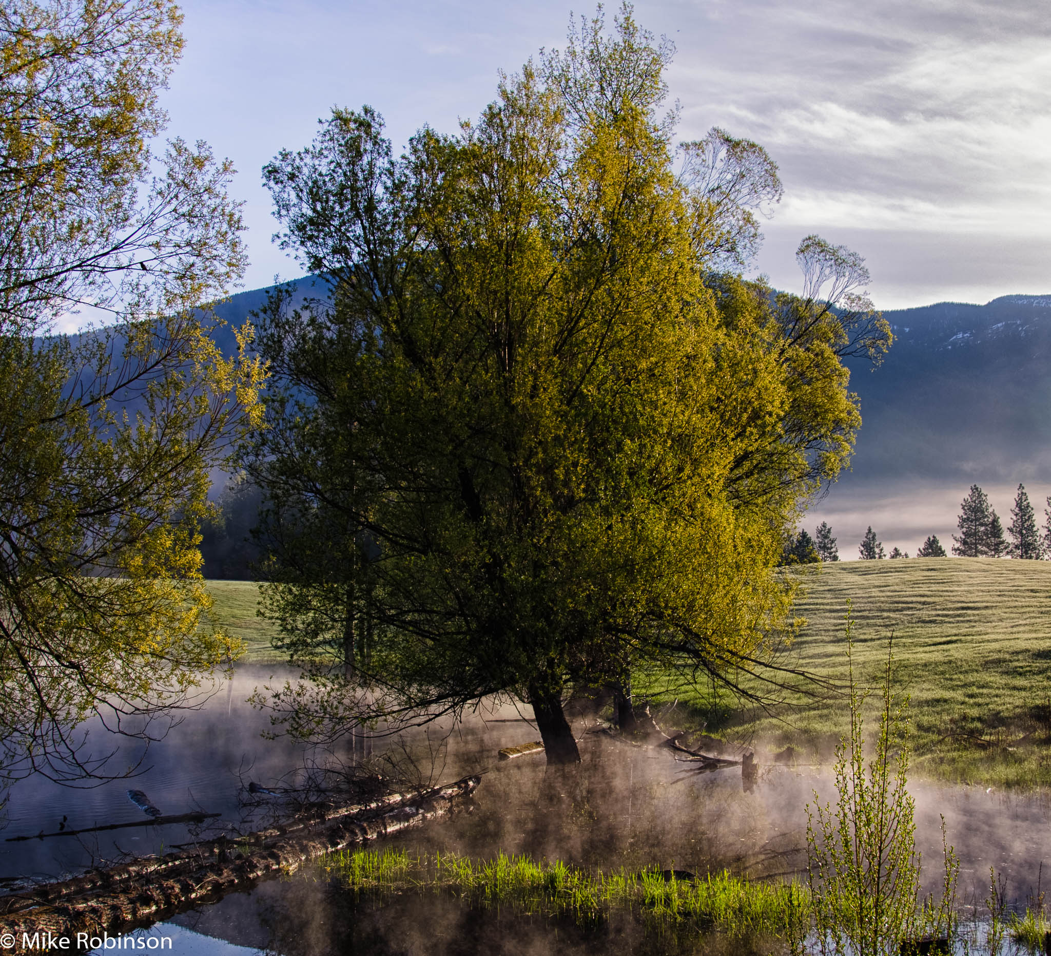 Montana Farm Tree 1.jpg