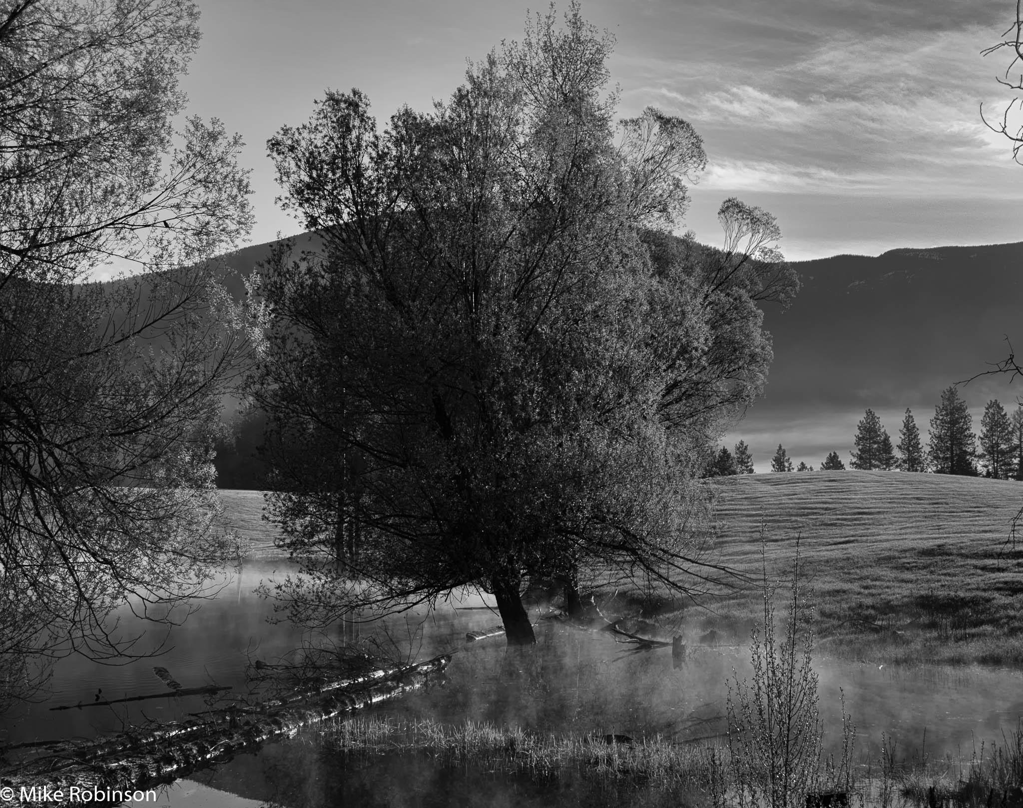 Montana Farm Tree 2.jpg