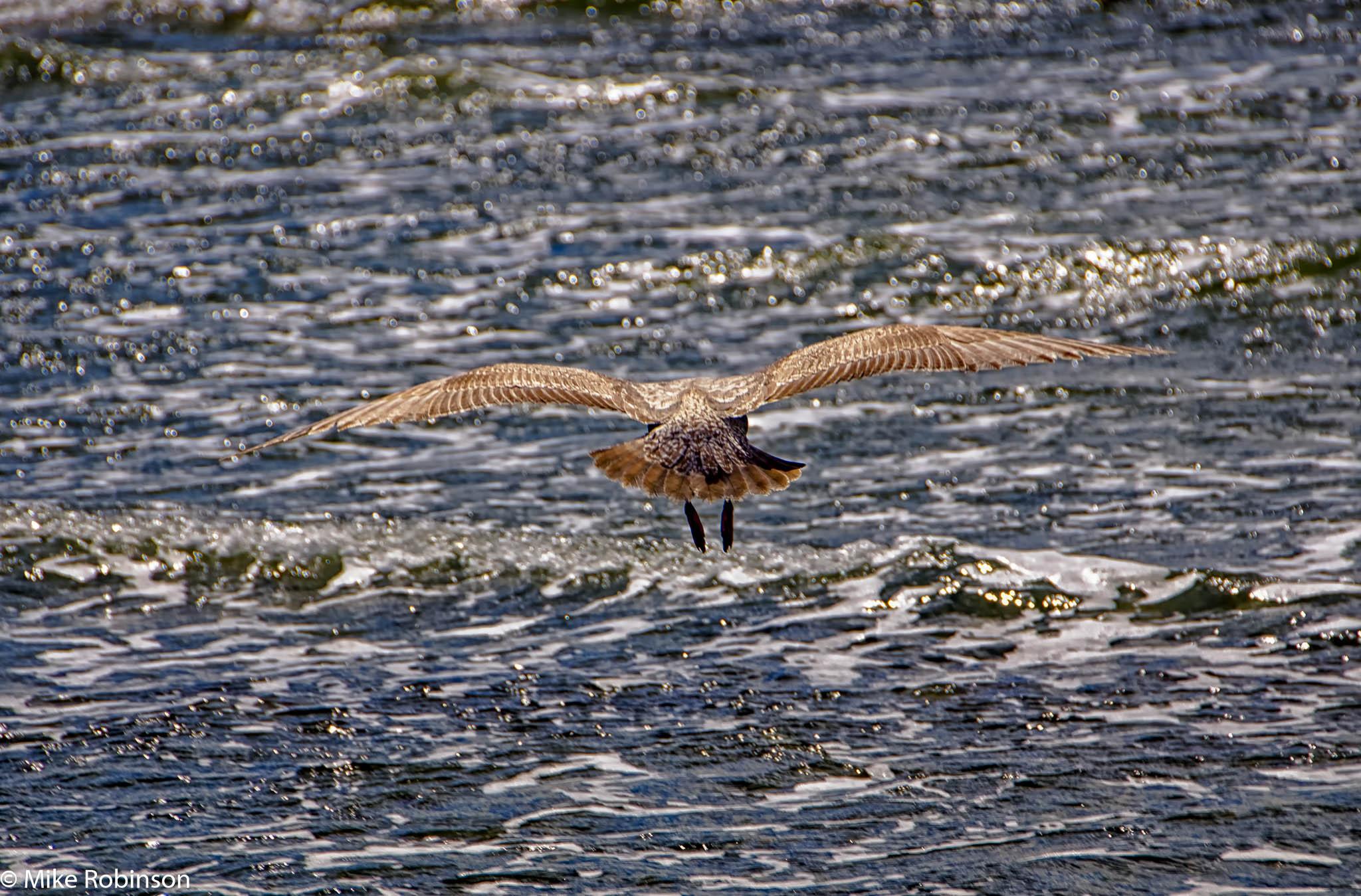 Sea and Gull.jpg