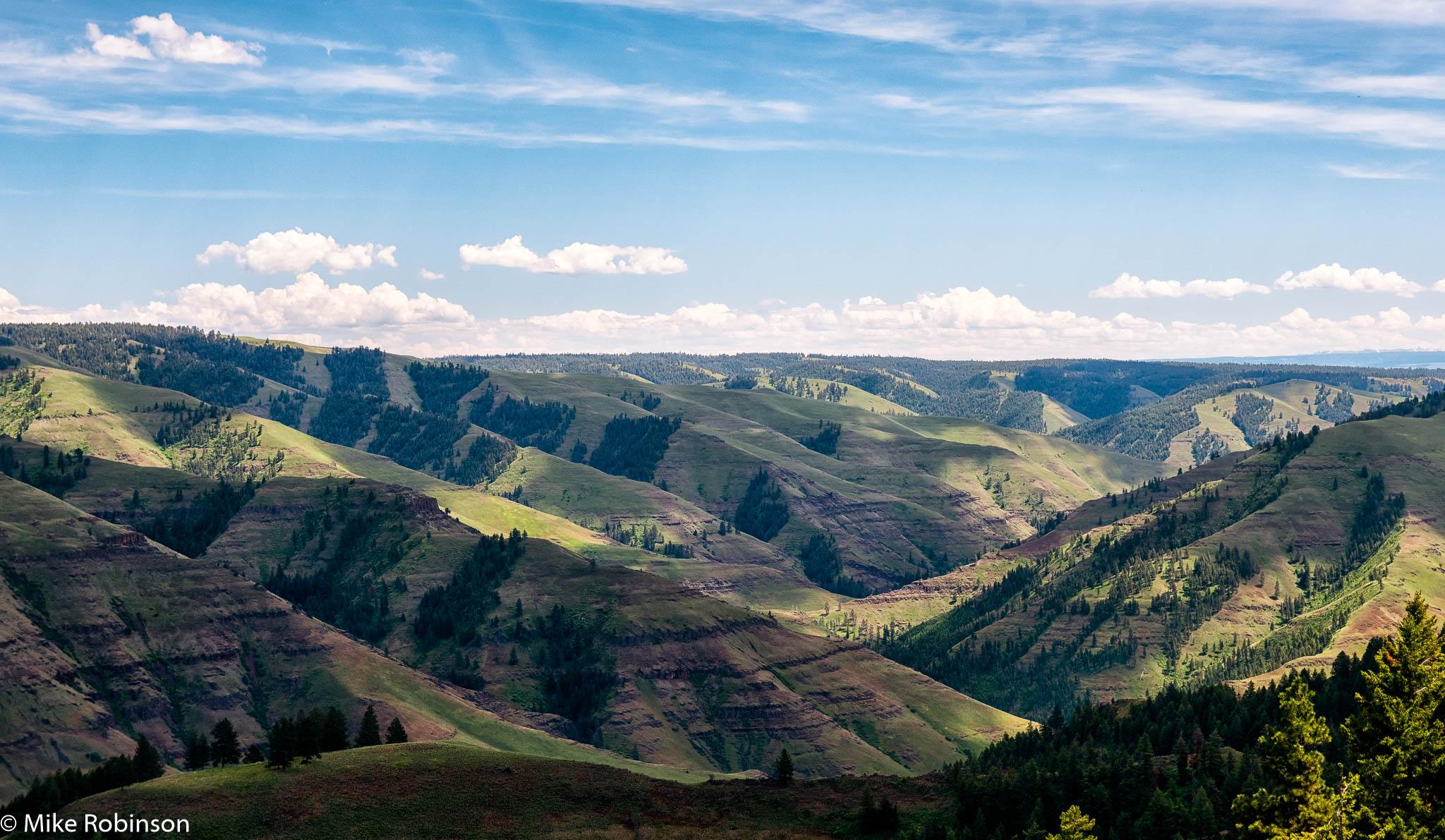 Flora Hills.jpg