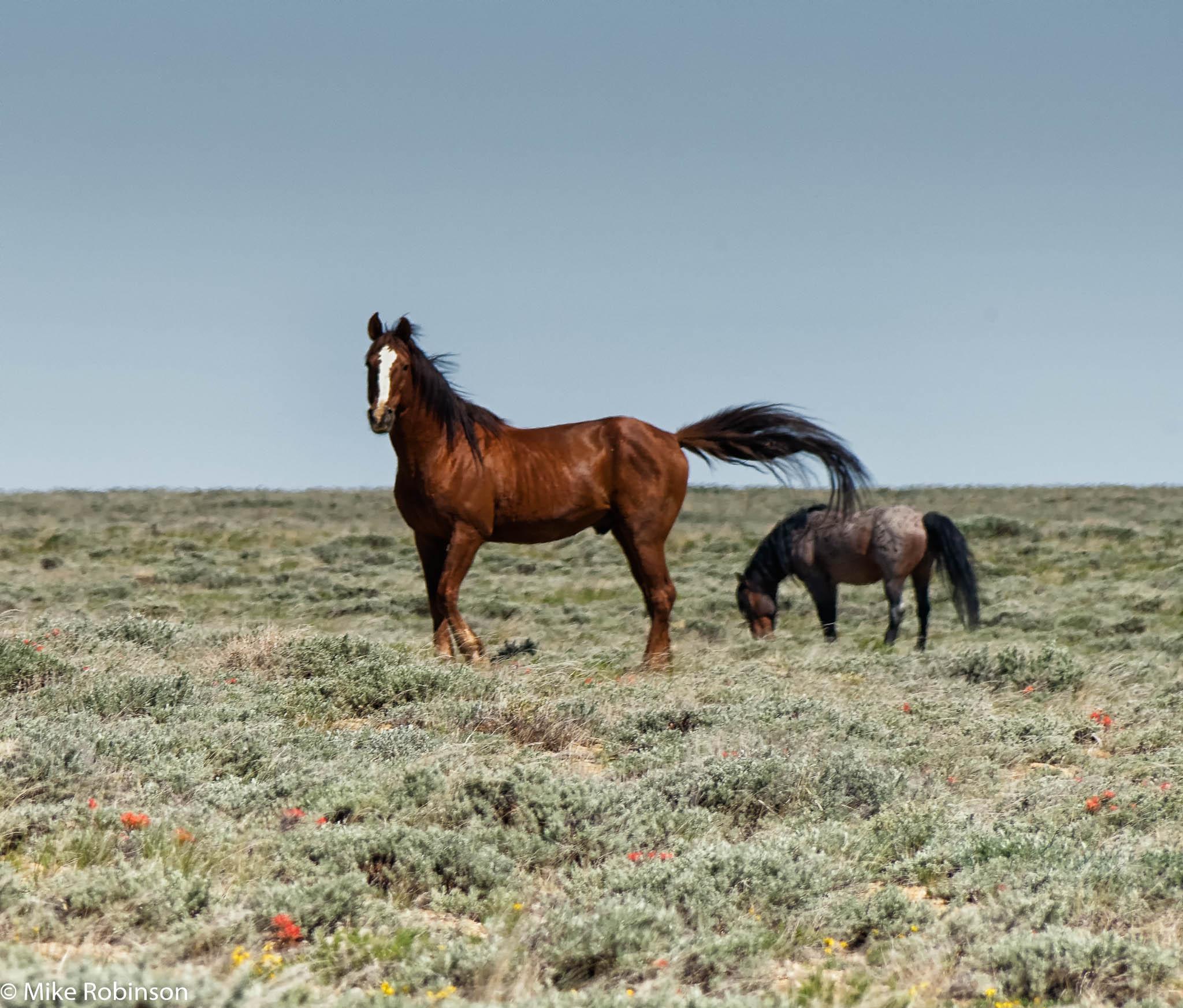 Wyoming Wild Horses 12.jpg
