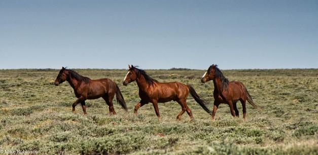 Wyoming Wild Horses 13.jpg
