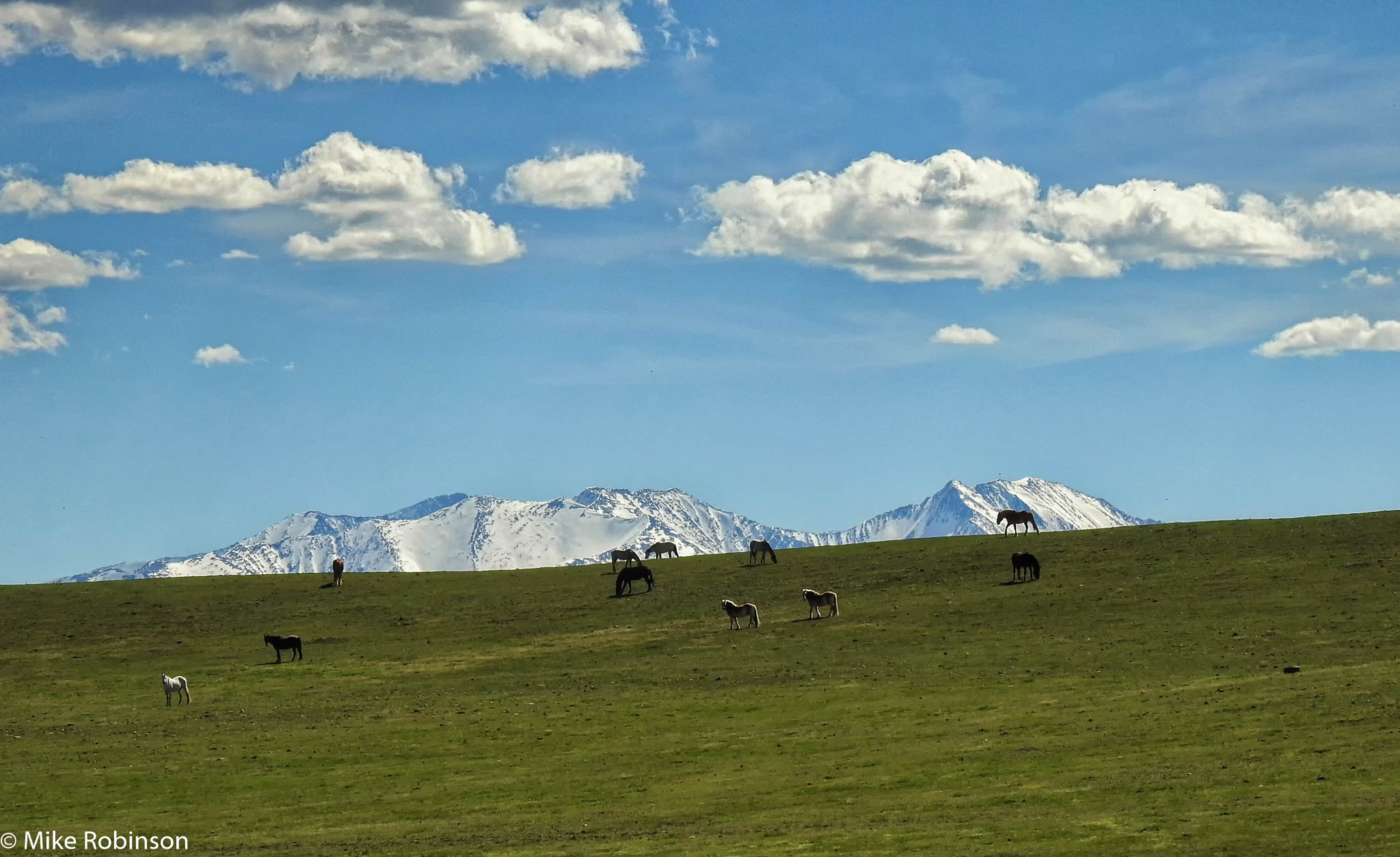 Crazy Mountains and Horses 2.jpg