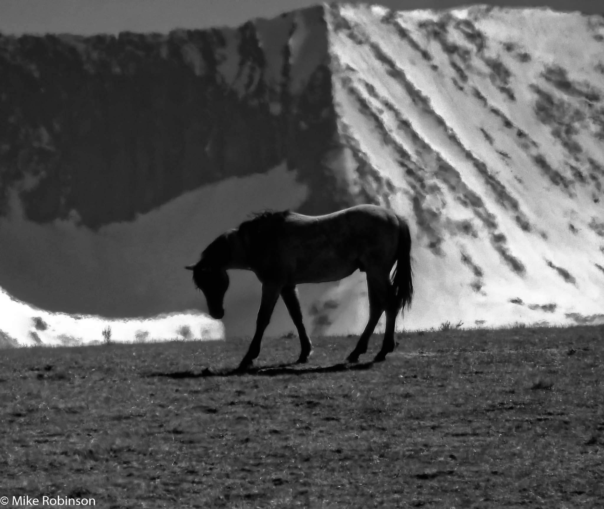 Crazy Mountains Horse