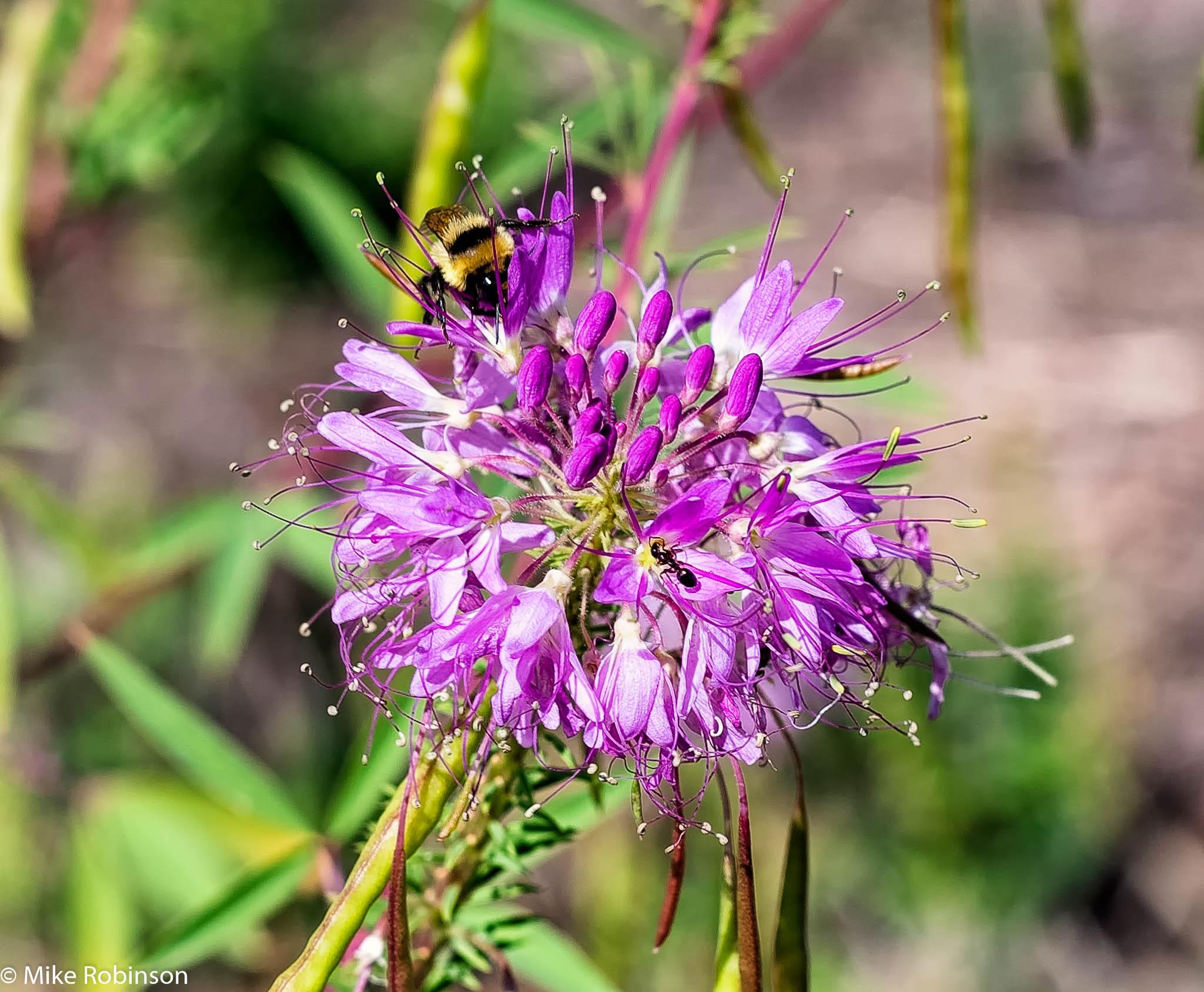Purple Flower Planet.jpg