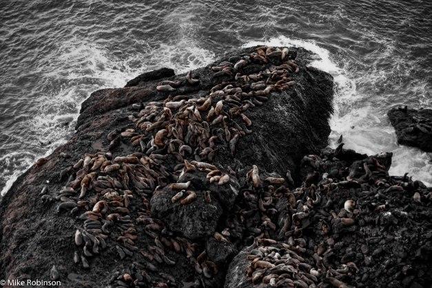 Heceta Sea Lions 3.jpg