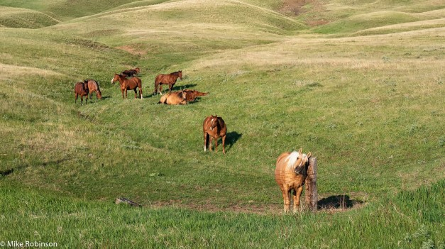 Horse Hangout.jpg
