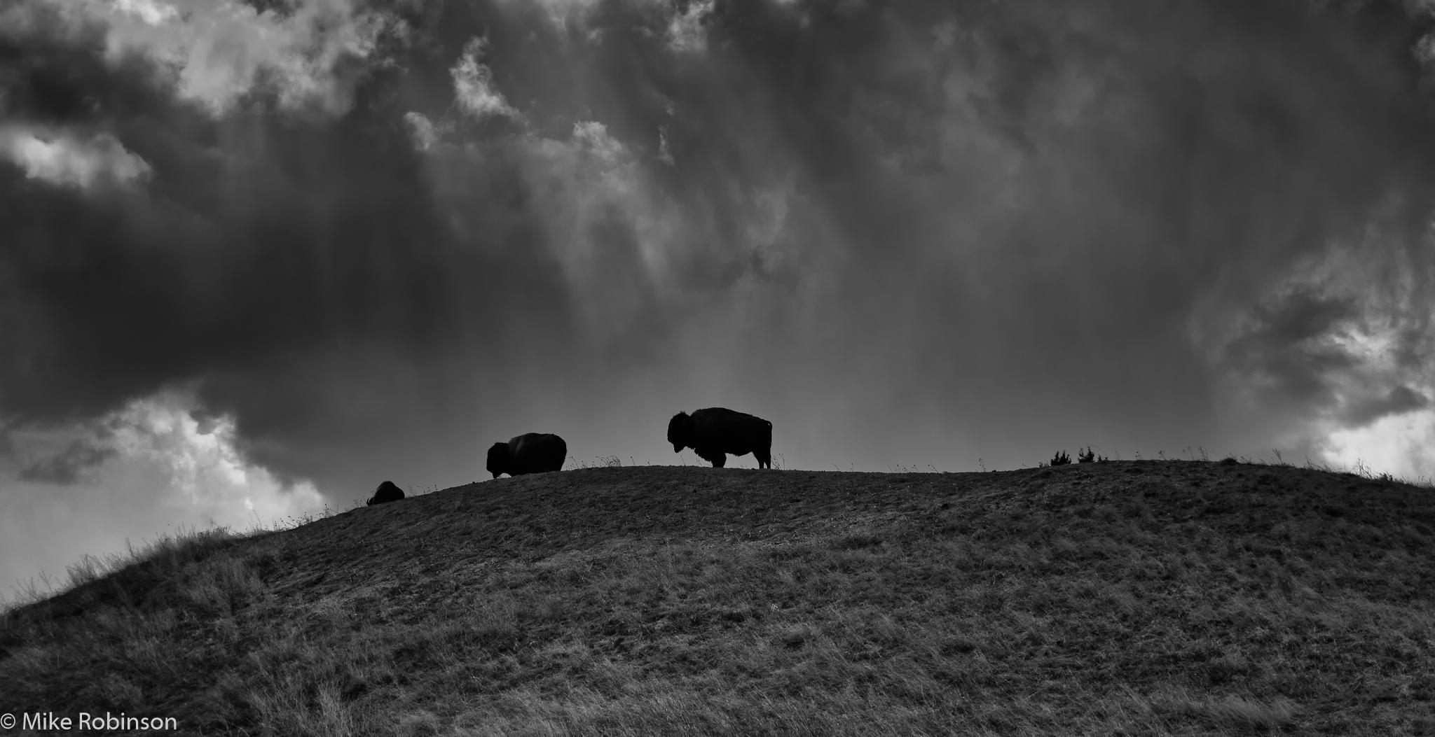 Badlands_Buffalo_Skyline_BW.jpg