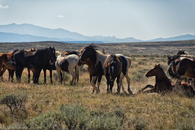 McCullough Horses 2.jpg