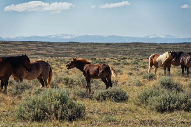 McCullough Horses 4.jpg