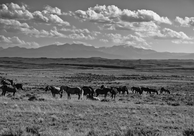 McCullough Horses 6.jpg