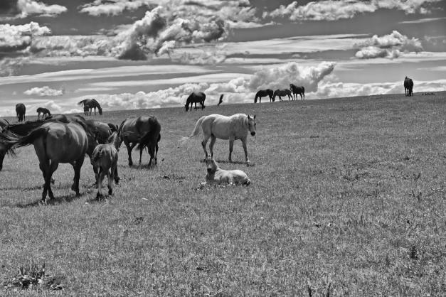 Pryor Horses 4.jpg