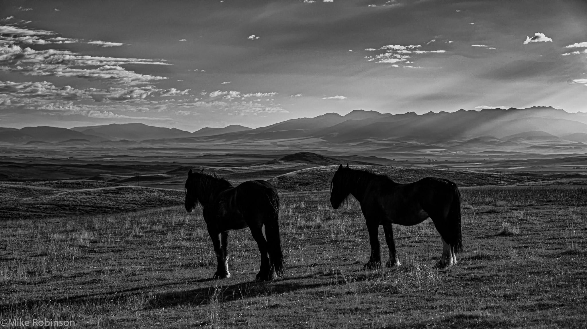 Bridger Horses 2.jpg