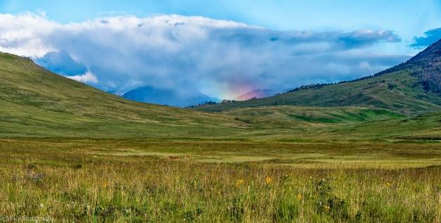 Montana Spring Scene.jpg