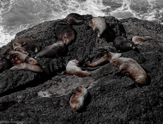 Sleepy Sea Lions.jpg