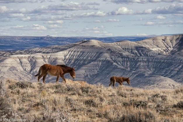 Wyoming_Wild_Horses_2.jpg